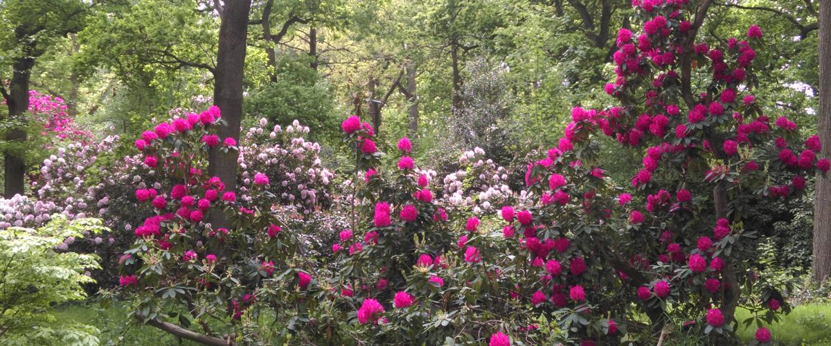 Bracknell in Bloom