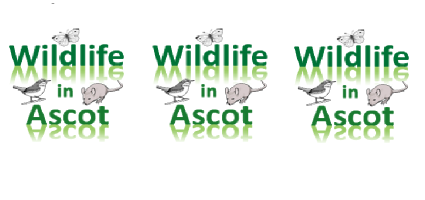 Wildlife in Ascot –  Find out which small Mammals live around us